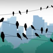 Grafik, die Vögel auf Leitungen sitzend vor einer Skyline zeigt (Copyright: Freepik)
